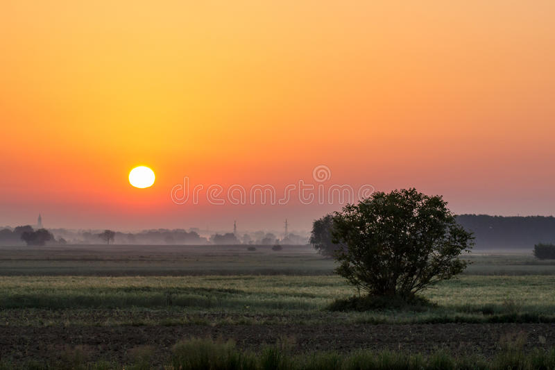 Sonnenaufgang und Baum stockbild