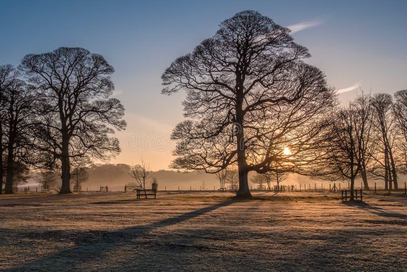 Sonnenaufgang-und Winter-Bäume Felbrigg Hall stockbild