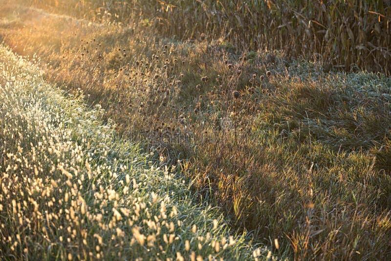 Sonnenaufgang-Unkräuter lizenzfreie stockbilder