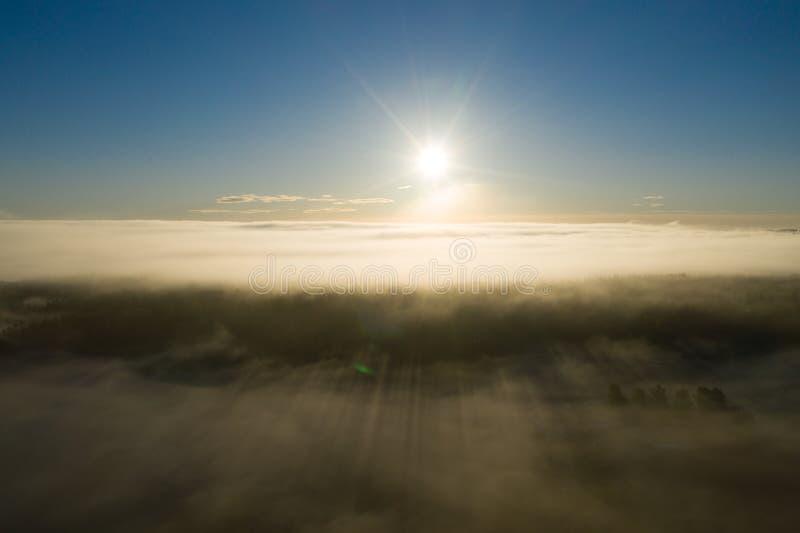 Sonnenaufgang, Wald und Frostnebel lizenzfreie stockfotografie