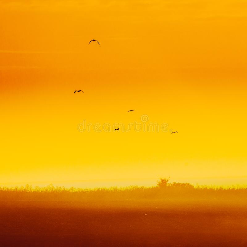 Sonnenaufgang in Yambol, Bulgarien mit Vögeln 1 lizenzfreie stockbilder