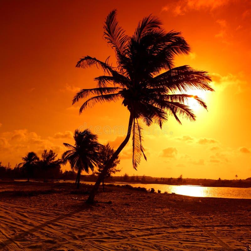 Sonnenaufgangpalme lizenzfreies stockfoto