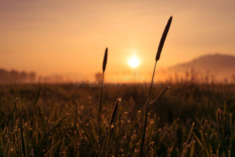 Sonnenaufgangreedmarschland kochelsee Bayernberge stockfotos