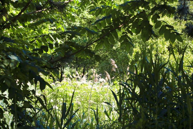 Sonnenbeschiene grüne wilde Rasenfläche Connecticut stockfotos