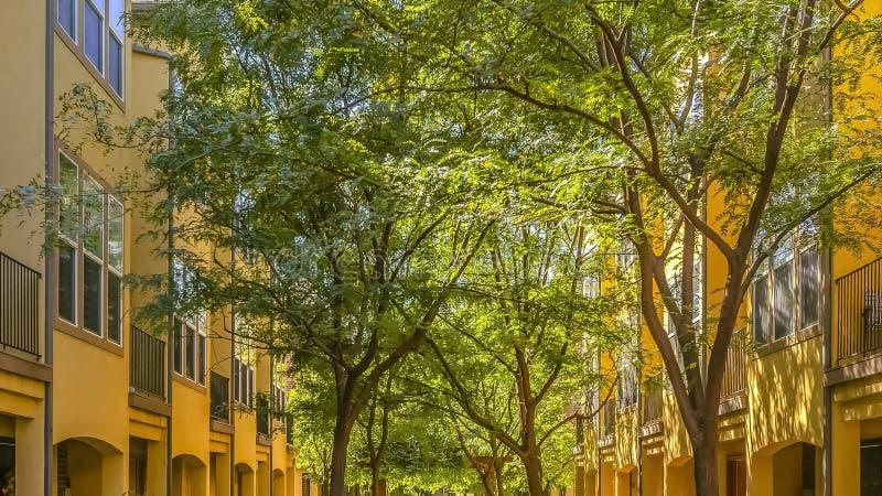 Sonnenbeschiene Wohngebäude und üppige Bäume stockfotografie