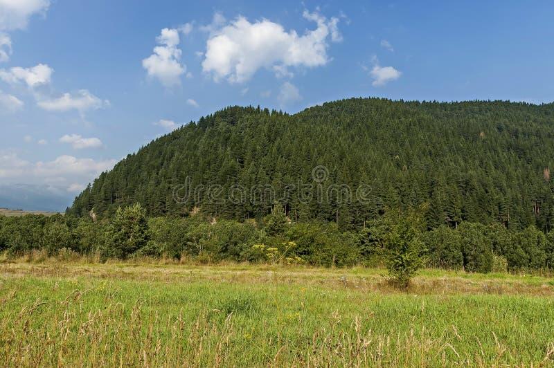 Sonnenbeschienes Gebirgsspitzen überwältigt mit Koniferenwald und Lichtung von Rila-Berg stockfoto