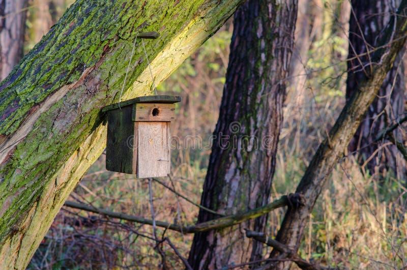 Sonnenbeschienes Haus für die Vögel stockbilder