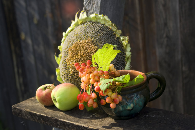 Sonnenblume, Äpfel und Viburnum stockfotos