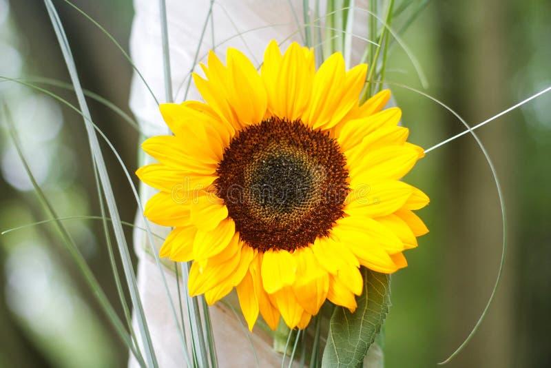Sonnenblume auf der Hochzeit lizenzfreies stockfoto