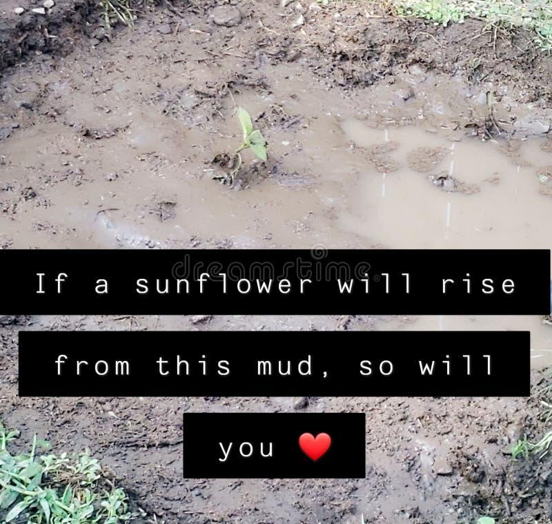 Sonnenblume, die vom Schlamm steigt lizenzfreie stockfotos