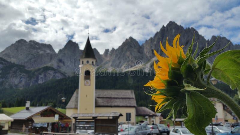 Sonnenblume durch die Berge stockfotografie