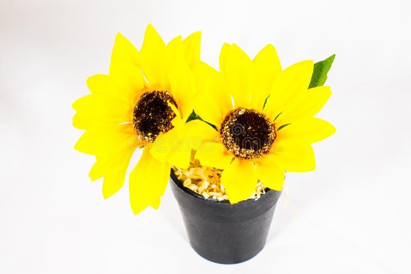Sonnenblume in einem Potenziometer lizenzfreie stockfotografie