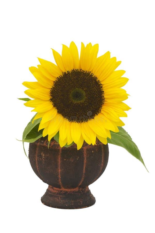 Sonnenblume in einem Vase stockbild