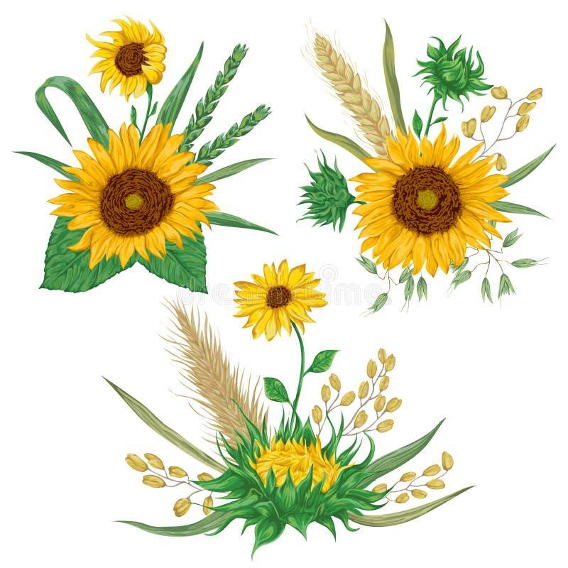 Sonnenblume, Gerste, Weizen, Roggen, Reis und Hafer Dekorative Blumenmusterelemente der Sammlung lizenzfreie abbildung