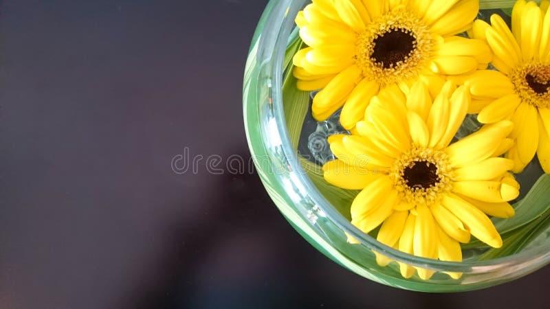 Sonnenblume im Topf stockfoto