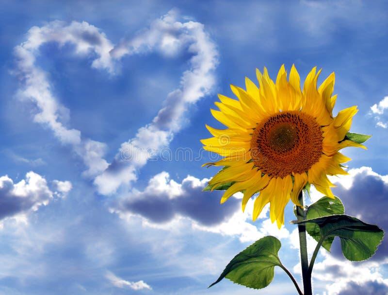 Sonnenblume-Inneres lizenzfreie stockfotografie