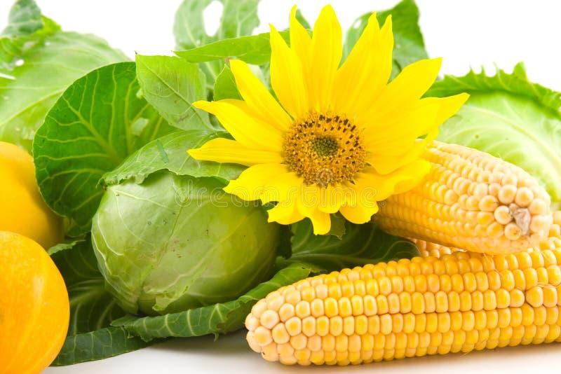 Sonnenblume, Mais, Kohl und Kürbis stockfotos