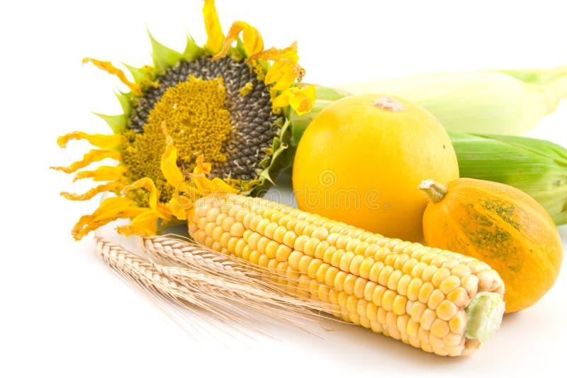 Sonnenblume, Mais, Weizen und Kürbis lizenzfreie stockbilder