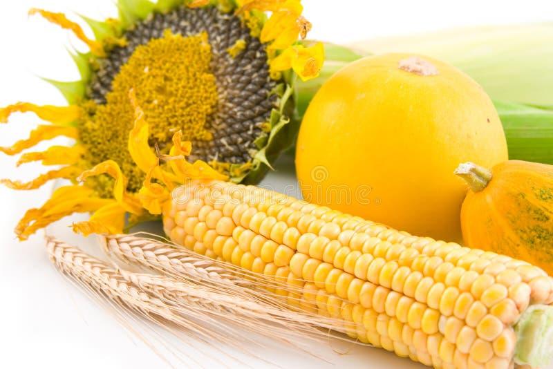 Sonnenblume, Mais, Weizen und Kürbis stockbild