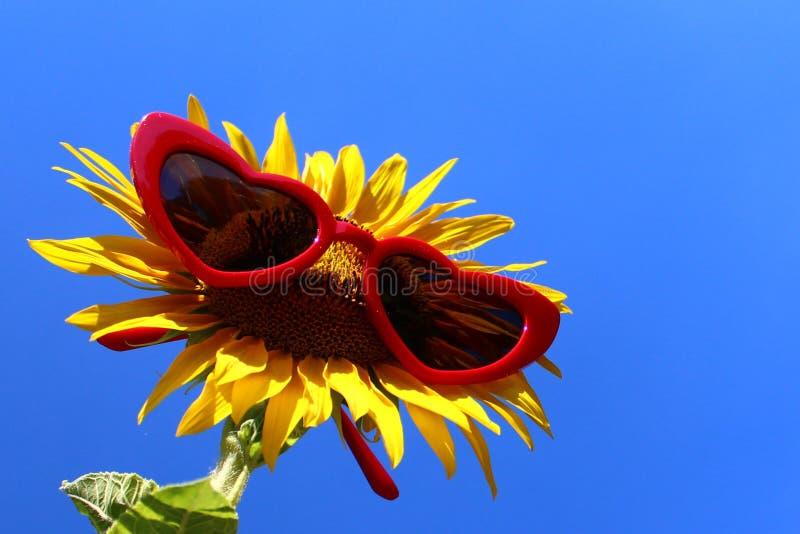 Sonnenblume mit Sonnenbrille stockbild