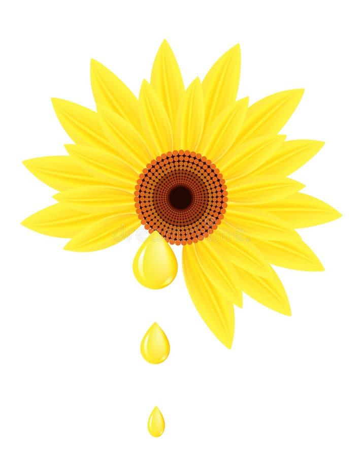 Sonnenblume mit Tropfen des Sonnenblumenöles. stock abbildung