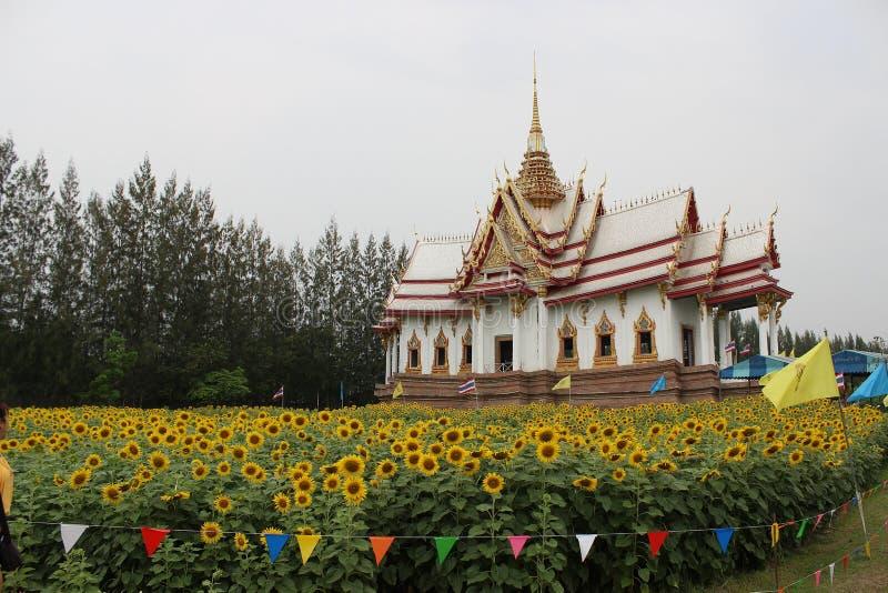 Sonnenblume und Tempel lizenzfreie stockfotos