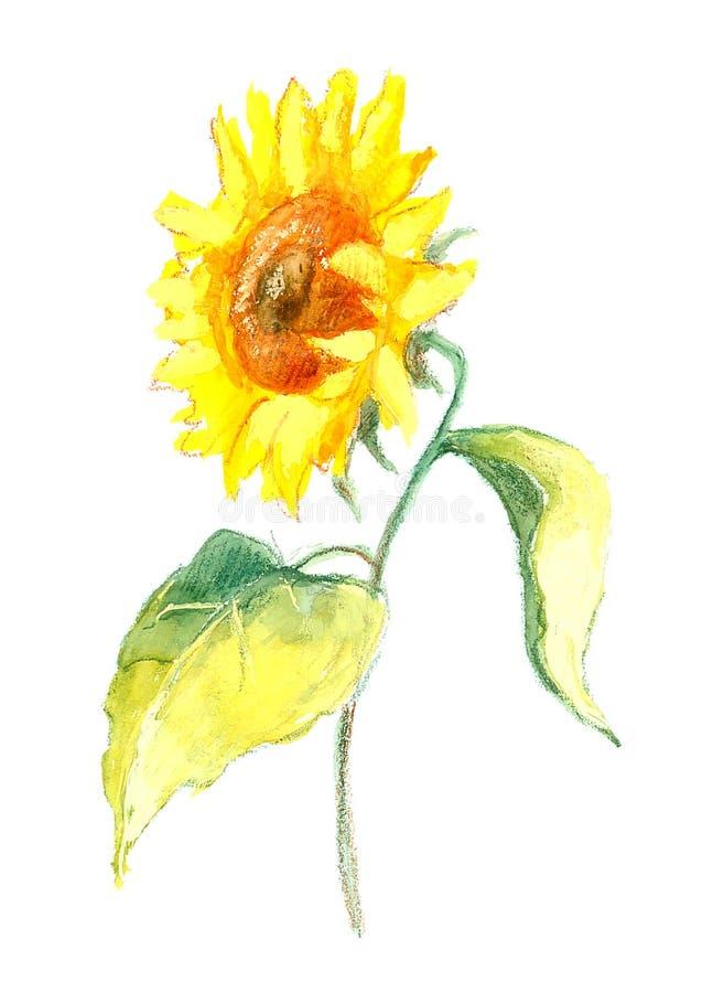 Sonnenblumeabbildung lizenzfreie stockfotografie
