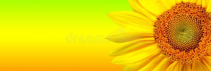 Sonnenblumefahne lizenzfreie abbildung