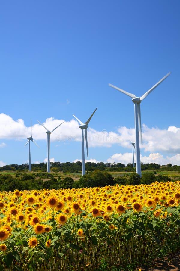 Sonnenblumefeld mit Windmühle stockbild