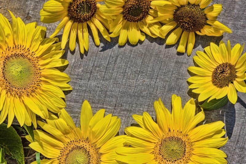 Download Sonnenblumen Auf Dem Alten Vorstand Stockfoto - Bild von auslegung, abbildung: 26369814