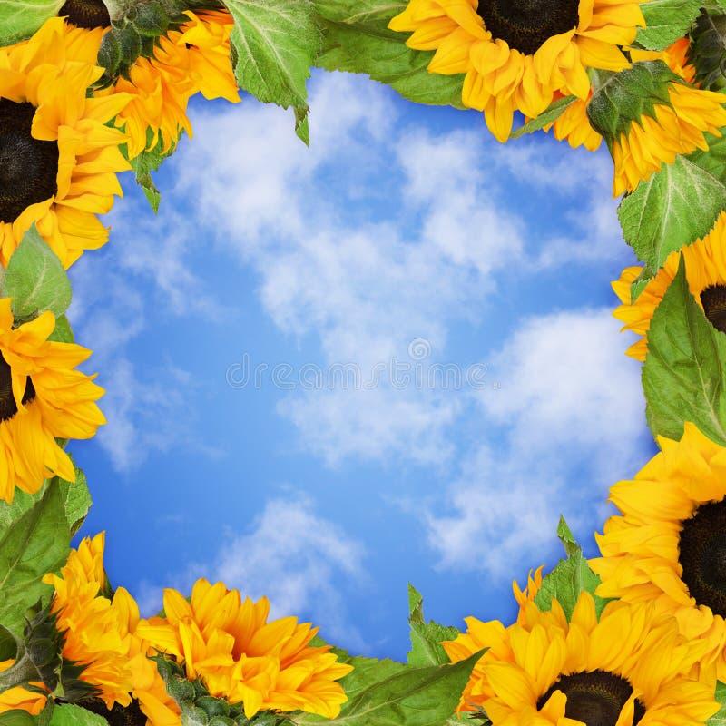Sonnenblumen gestalten auf blauem Himmel stockfotos