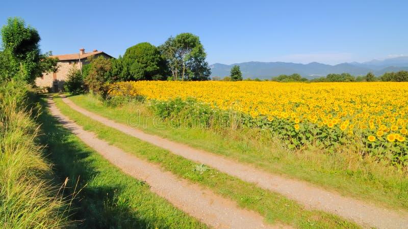 Sonnenblumen und Bauernhaus no.1 stockbilder