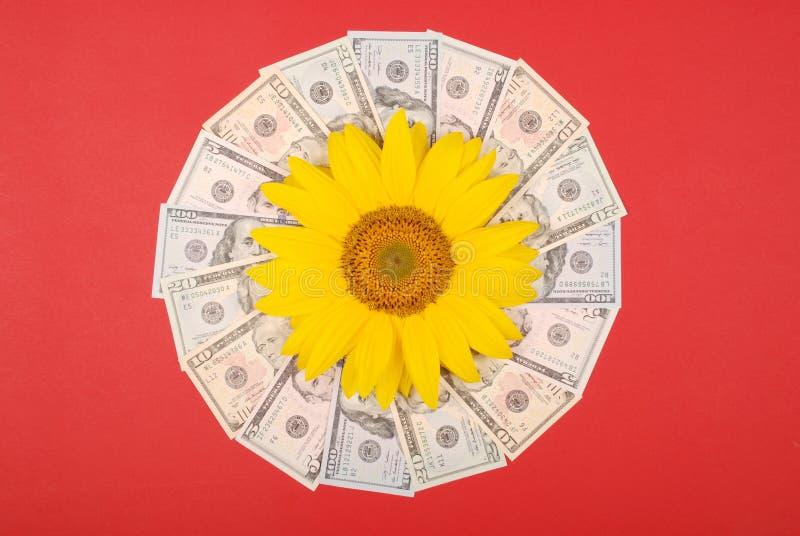 Sonnenblumenblume auf Mandalakaleidoskop vom Geld Abstrakter Geldhintergrundrastermusterwiederholungs-Mandalakreis stockbild
