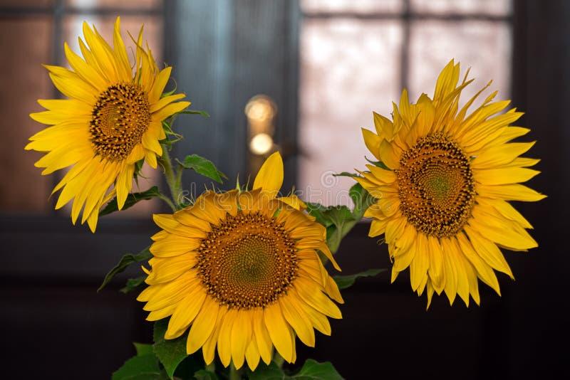 Sonnenblumenblumen in einem keramischen Vase stockbilder