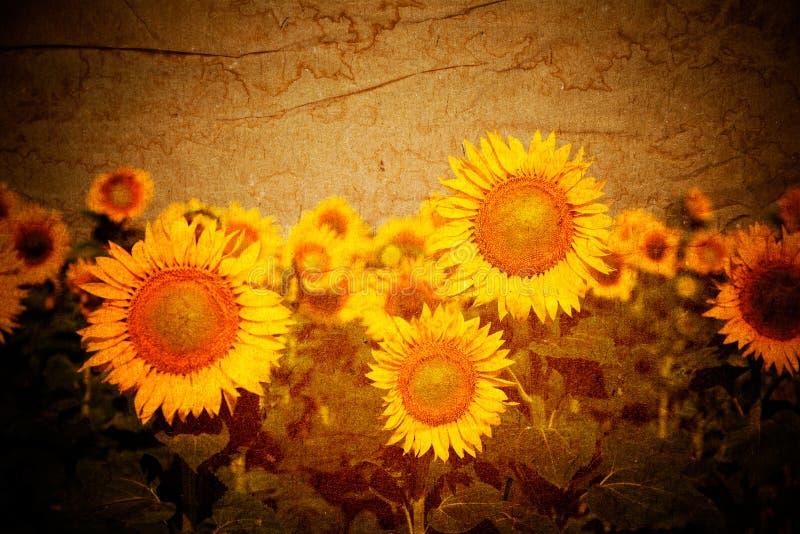 Sonnenblumenweinlesehintergrund stockfoto