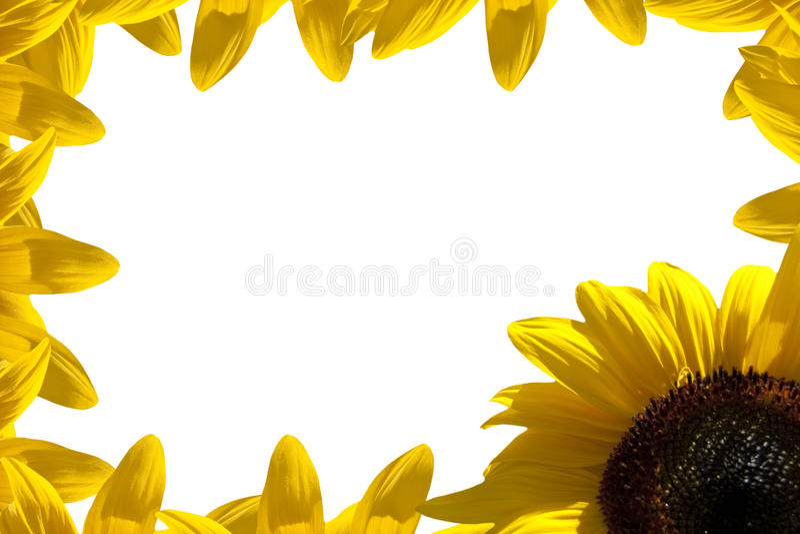 Sonnenblumerand lizenzfreies stockbild
