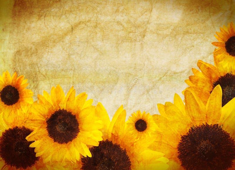Sonnenblumerand stockfotos