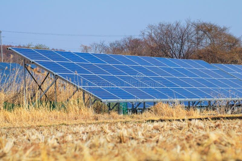 Sonnenkollektor, photo-voltaische Module für Innovation grünen Energie FO stockfoto
