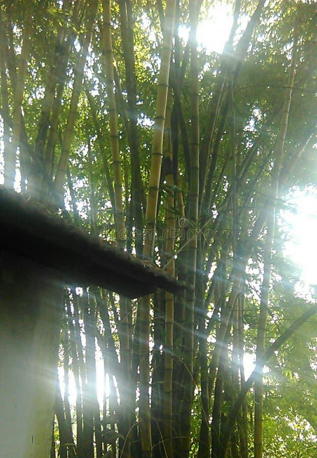 Sonnenlicht, das durch Bäume überschreitet stockfoto