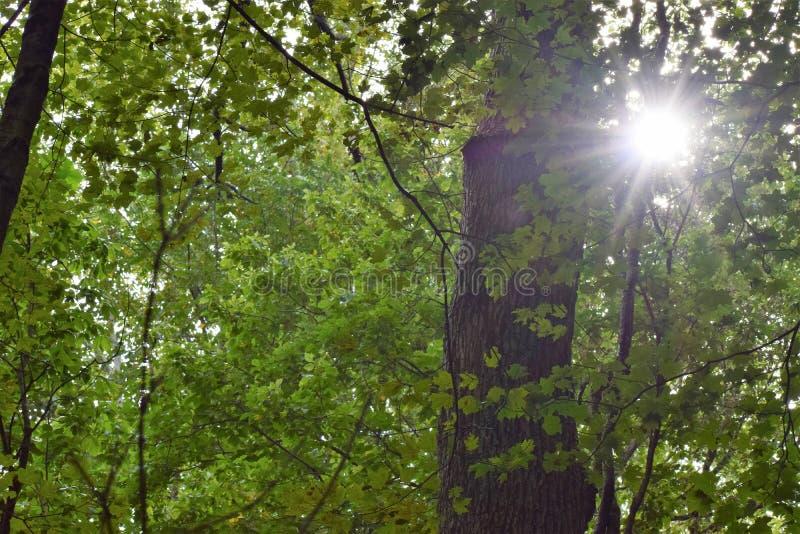 Sonnenlicht, das durch kommt stockbilder
