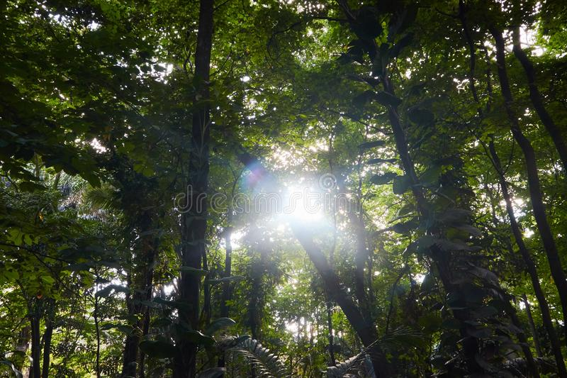 Sonnenlicht, das in einen Wald erscheint stockbilder
