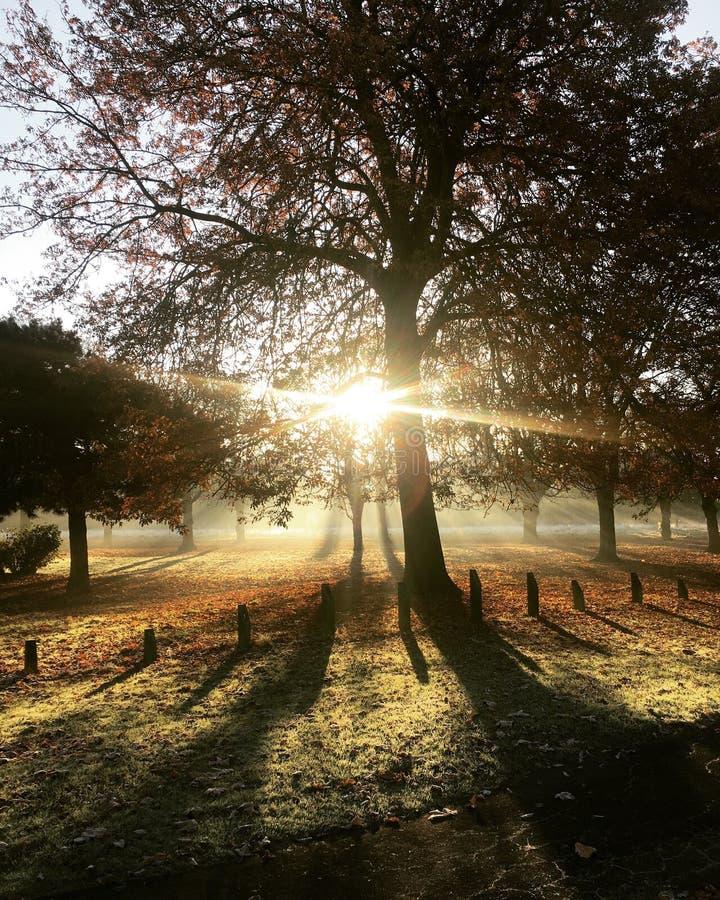 Sonnenlicht durch Bäume im Park lizenzfreie stockfotografie