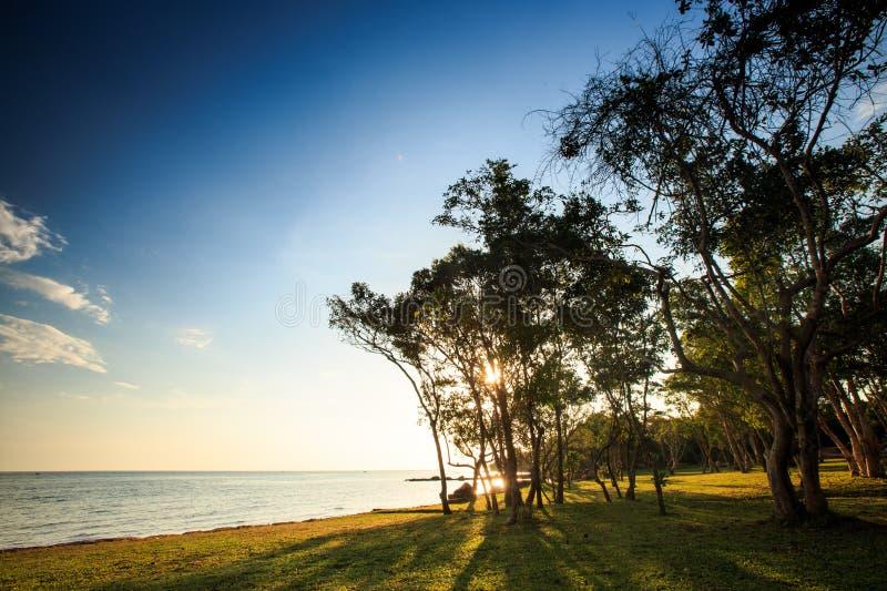 Sonnenlicht durch Lacy Trees Branches auf Strand-Rasen bei Sonnenuntergang lizenzfreies stockfoto