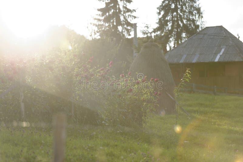 Sonnenlicht im Garten, Arieseni, Rumänien stockbilder