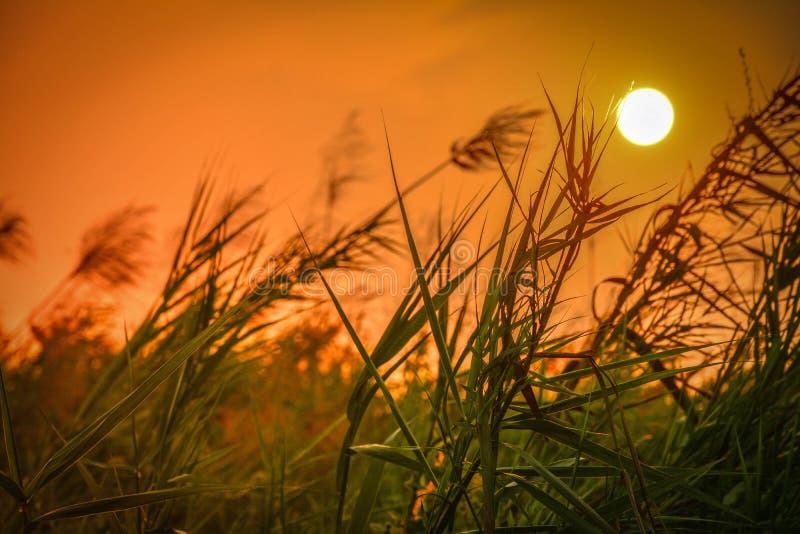 Sonnenlicht mit Gras stockbilder