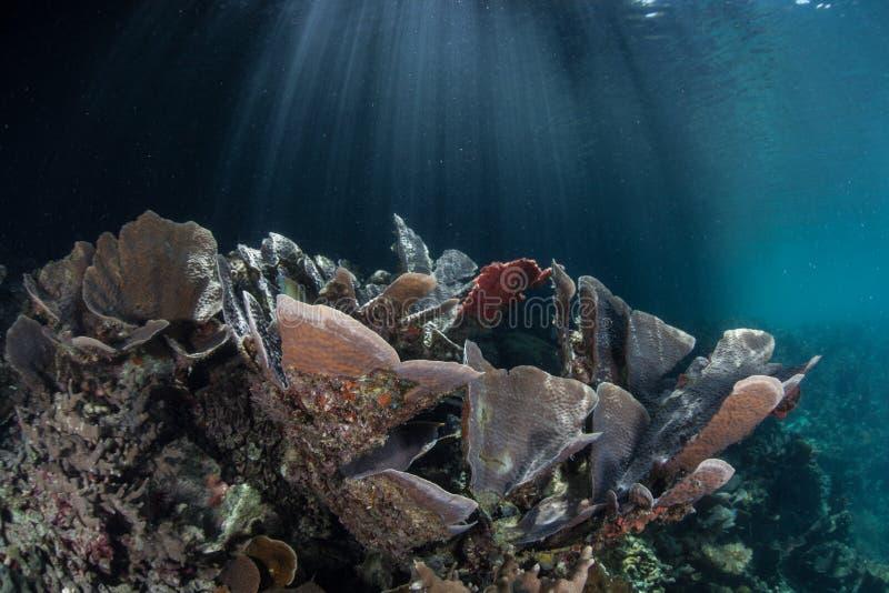 Sonnenlicht und empfindliche Korallen lizenzfreies stockbild
