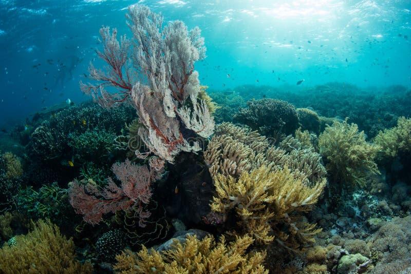 Sonnenlicht und herrliche Korallen in Nationalpark Komodo stockfoto
