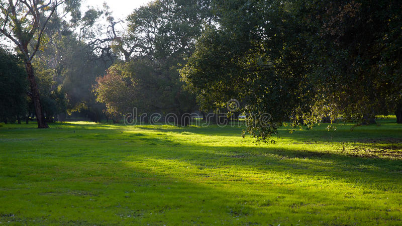 Sonnenschein auf dem grünen Land in einem Park stockbilder
