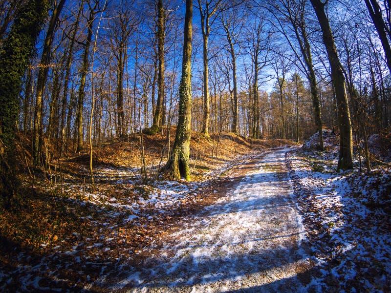 Sonnenschein auf einem eisigen und eisigen Waldweg lizenzfreie stockfotos