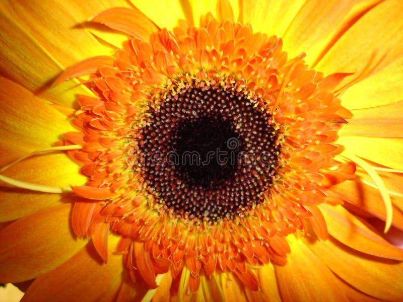 Download Sonnenschein In Der Blumen-Form Stockfoto - Bild von orange, seeds: 864502